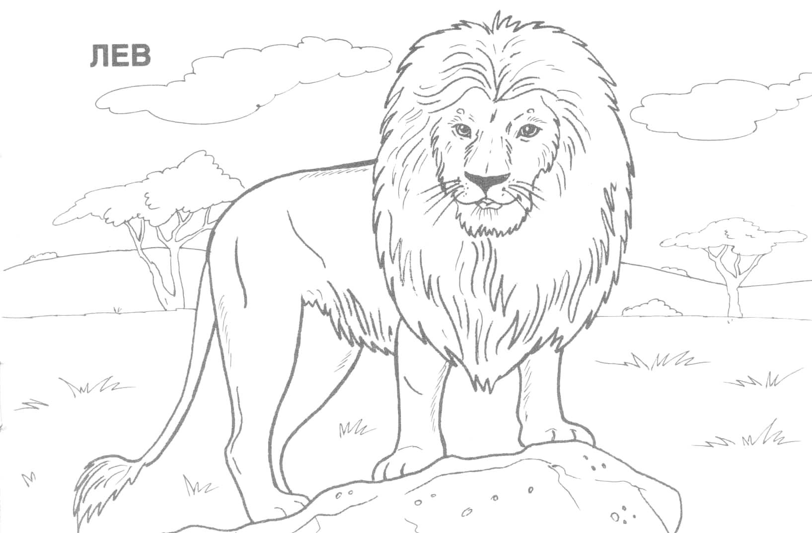 wild animals and coloring pages - photo#13